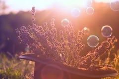 Sommarbakgrund i mjuk fokus Arkivfoton