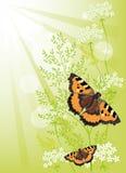 Sommarbakgrund med blommor och fjärilar Arkivfoto