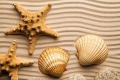 Sommarbakgrund - sjöstjärnor och skal på strandsand arkivfoton