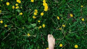 Sommarbegrepp: Kvinnlign foots i vita gymnastikskor p? f?lt f?r gr?nt gr?s med gula maskrosor stock video