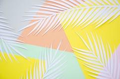 Sommarbegrepp med vitbokpalmblad på färgbakgrund med kopieringsutrymme Gömma i handflatan tropiskt exotiskt för sommar växtramen arkivbild