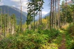 Sommarberg landskap Arkivbilder