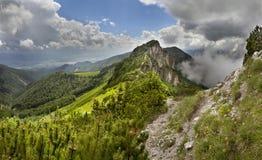 Sommarbergkant i Mala Fatra National Park, Slovakien Royaltyfri Fotografi