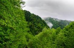 Sommarbergskog med foliar träd i Gaucasus, Mezmay Arkivbild
