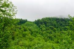 Sommarbergskog med foliar träd i Gaucasus, Mezmay Royaltyfria Foton