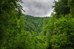 Sommarbergskog med foliar träd i Gaucasus, Mezmay Arkivfoto