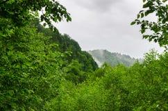 Sommarbergskog med foliar träd i Gaucasus, Mezmay Royaltyfri Bild