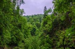 Sommarbergskog med foliar träd i Gaucasus, Mezmay Arkivfoton