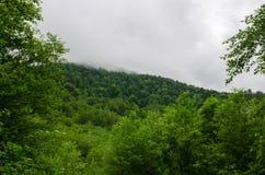 Sommarbergskog med foliar träd i Gaucasus, Mezmay Royaltyfri Foto