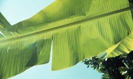 Sommarblomma taiwan Arkivbild