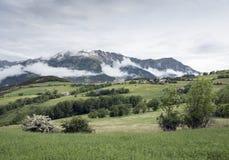 Sommarblommor och berg near barcelonnette i haute provence royaltyfria foton