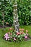 Sommarblommor rundar grunden av ett träd med en trädgårds- gaffel som förbi stås nära Royaltyfria Bilder