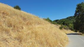 Sommarbruntgräs royaltyfria bilder