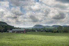 Sommarcornfielden i limefrukt vaggar, Connecticut arkivbild