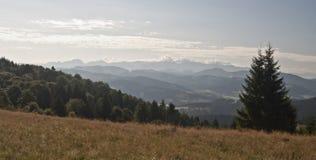 Sommardag i Javorniky berg Arkivfoton