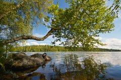 Sommardag på en sjö Arkivbilder
