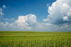 Sommardagen med vit fördunklar på en blå himmel Royaltyfri Foto