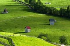 Sommareftermiddag i nord av Rumänien Royaltyfri Fotografi