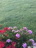 Sommaren färgar Royaltyfria Bilder