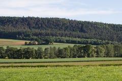 SOMMAREN landskap Royaltyfria Bilder