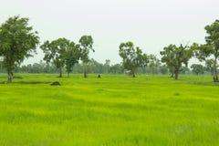SOMMAREN landskap field green Arkivbild