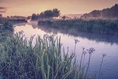 Sommaren landskap med floden arkivfoton