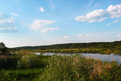 Sommaren landskap med floden Royaltyfri Foto