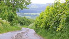 Sommaren landskap med vägen stock video
