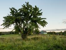 SOMMAREN landskap Träd och gräsplanäng Natur Royaltyfri Fotografi
