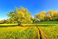 Sommaren parkerar, trees Royaltyfri Bild