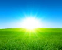 Sommarfält Arkivbild