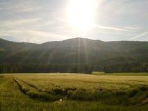 Sommarfält Fotografering för Bildbyråer