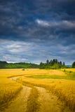 Sommarfält Arkivfoton