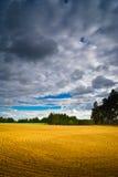 Sommarfält Arkivbilder