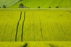 Sommarfält av gräsplan Royaltyfria Foton