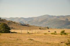 Sommarfält i Kroatien Royaltyfri Bild