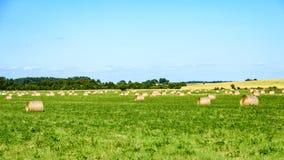 sommarfält med rullar av hö Royaltyfri Bild