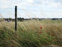Sommarfält med staketet Arkivfoton