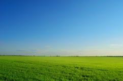 Sommarfält under klar himmel Arkivbilder