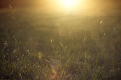 Sommarfältbakgrund i solnedgång- eller soluppgångtid Arkivbilder