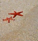 Sommarferie - röd sjöstjärna Royaltyfri Foto