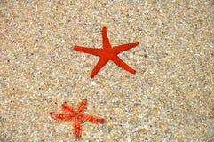 Röd sjöstjärna i stranden Royaltyfri Fotografi