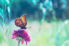 Sommarfjäril och blomman Arkivbild