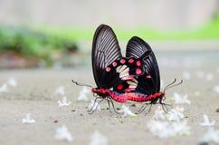 Sommarfjärilar Arkivfoto