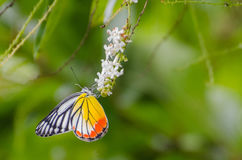 Sommarfjärilar Royaltyfri Foto
