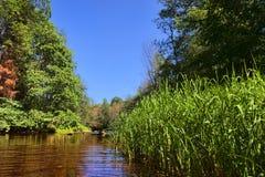 Sommarflodplats Arkivbilder