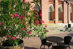 Sommargatakafé med blommor på bakgrunden av historiska byggnaden royaltyfri fotografi