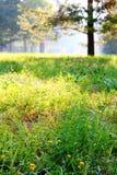 Sommargläntan översvämmade med ljust suddigt, fokus på gräs Royaltyfri Fotografi