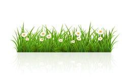Sommargräs Arkivfoto