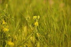 Sommargräs Arkivbild